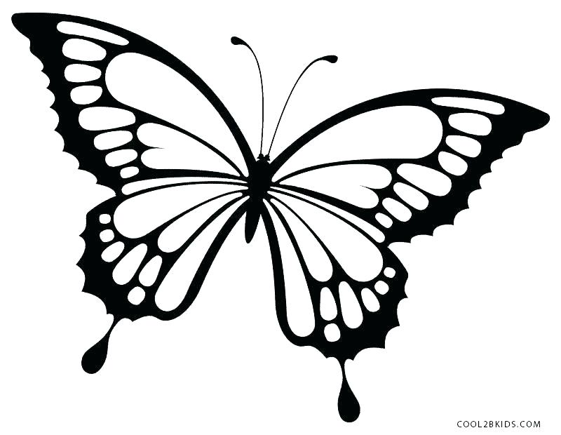 800x620 Butterfly Easy Drawing