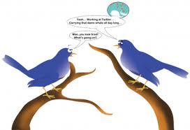 272x186 Funny Bird Drawing Funny Animal