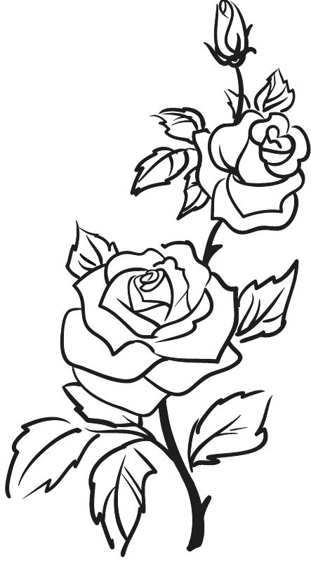443x800 Drawings Of Flowers In Black And White