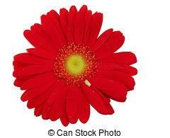 240x195 gerbera daisy illustrations and clipart gerbera daisy
