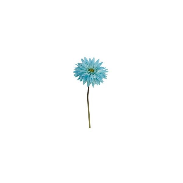 600x600 turquoise blue gerbera daisy for bouquet! for me gerbera