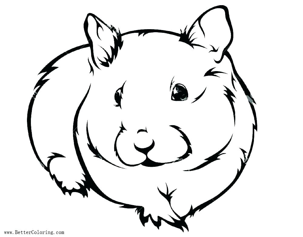 Collection of Gerbil clipart | Free download best Gerbil ...