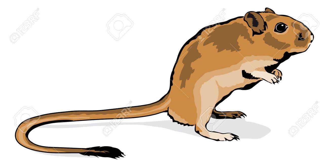 1300x660 rodent clipart gerbil
