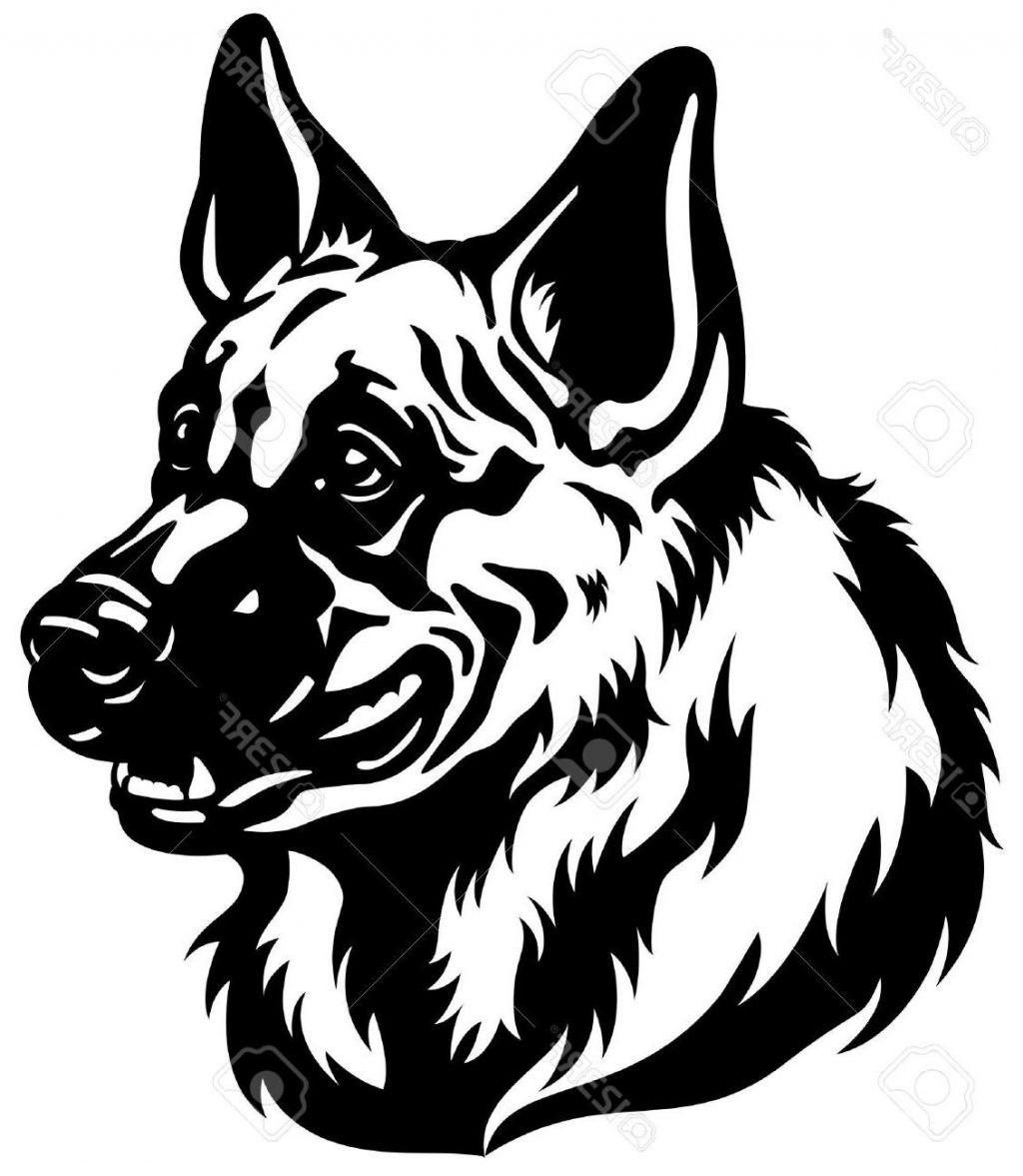 1024x1177 how to draw a german shepherd how to draw a german shepherd dog