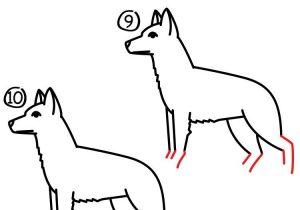 300x210 how to draw a easy german shepherd how to draw a german shepherd