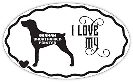 German Shorthaired Pointer Drawing