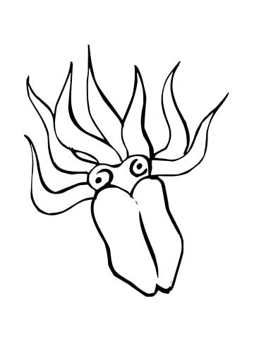 360x480 squid coloring pages giant squid coloring