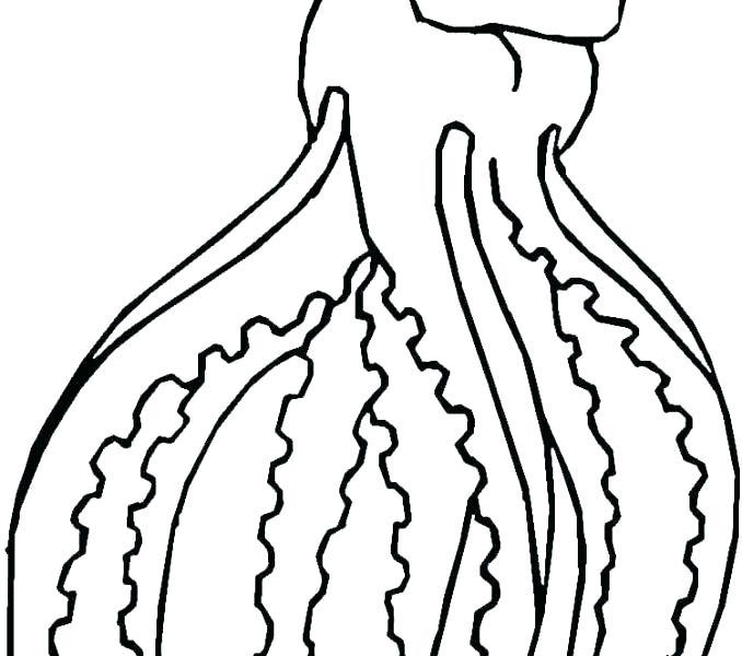 678x600 squid coloring pages squid coloring pages printable giant vampire