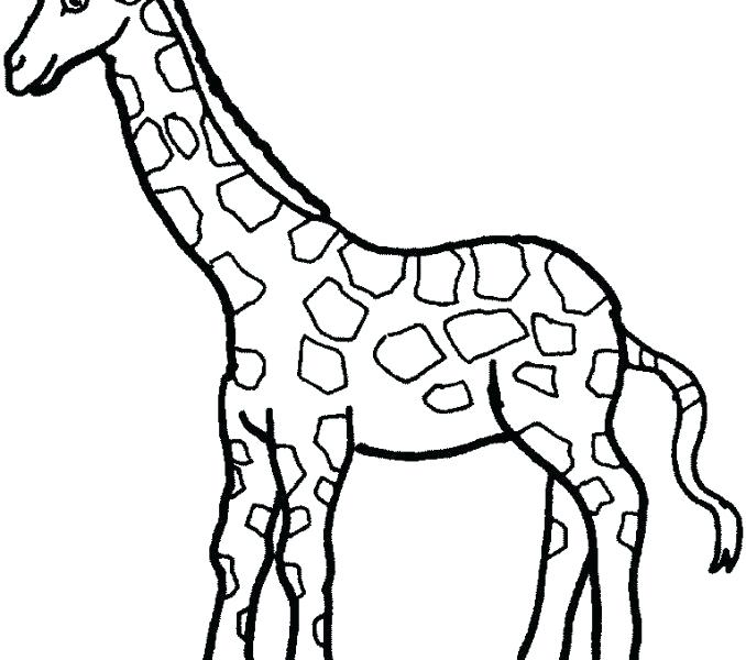 678x600 giraffe drawing easy how to draw a giraffe for kids step giraffe