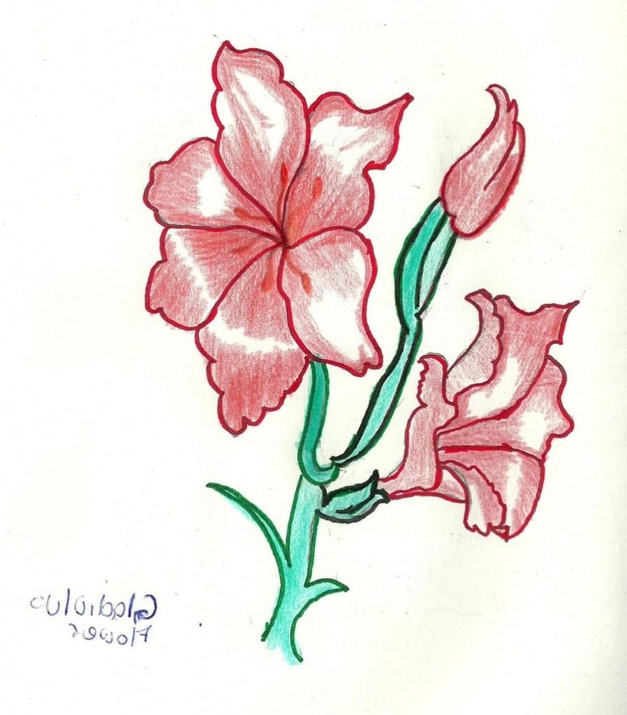Gladiolus Flower Drawing Free Download Best Gladiolus Flower