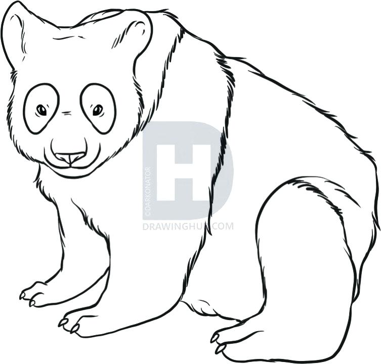753x720 How To Draw A Chinese Panda How To Draw A Panda Step How