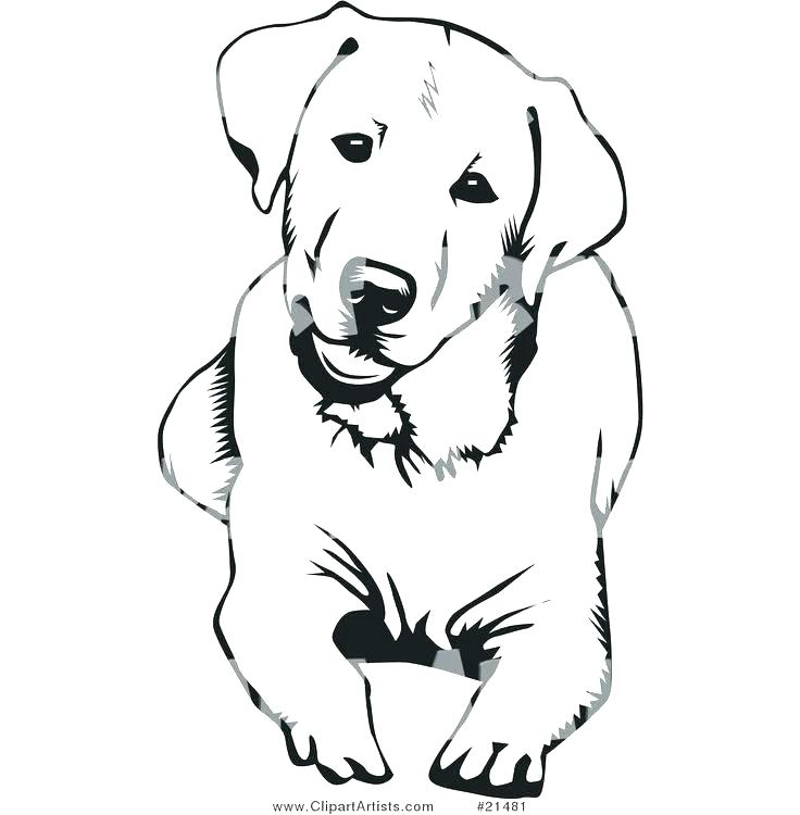 Golden Retriever Line Drawing Free Download Best Golden