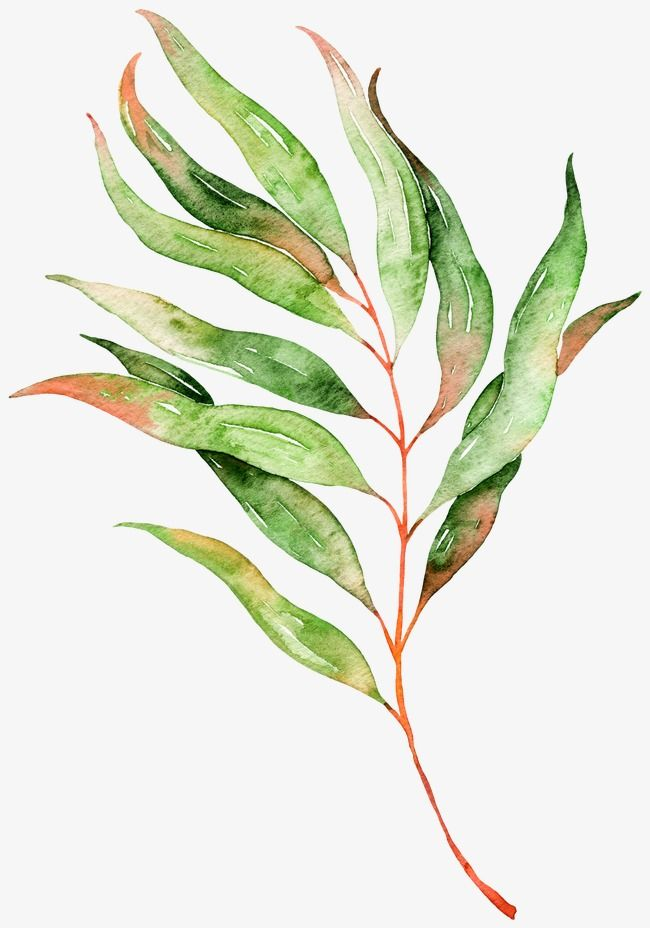 650x928 Leaves, Watercolor, Plant, Leaf Png Image And Clipart For Free