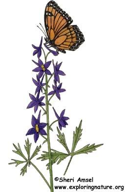 258x391 Plant A Butterfly Garden