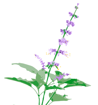 315x336 Tulsi Herbstalk's Plant Of The Year!