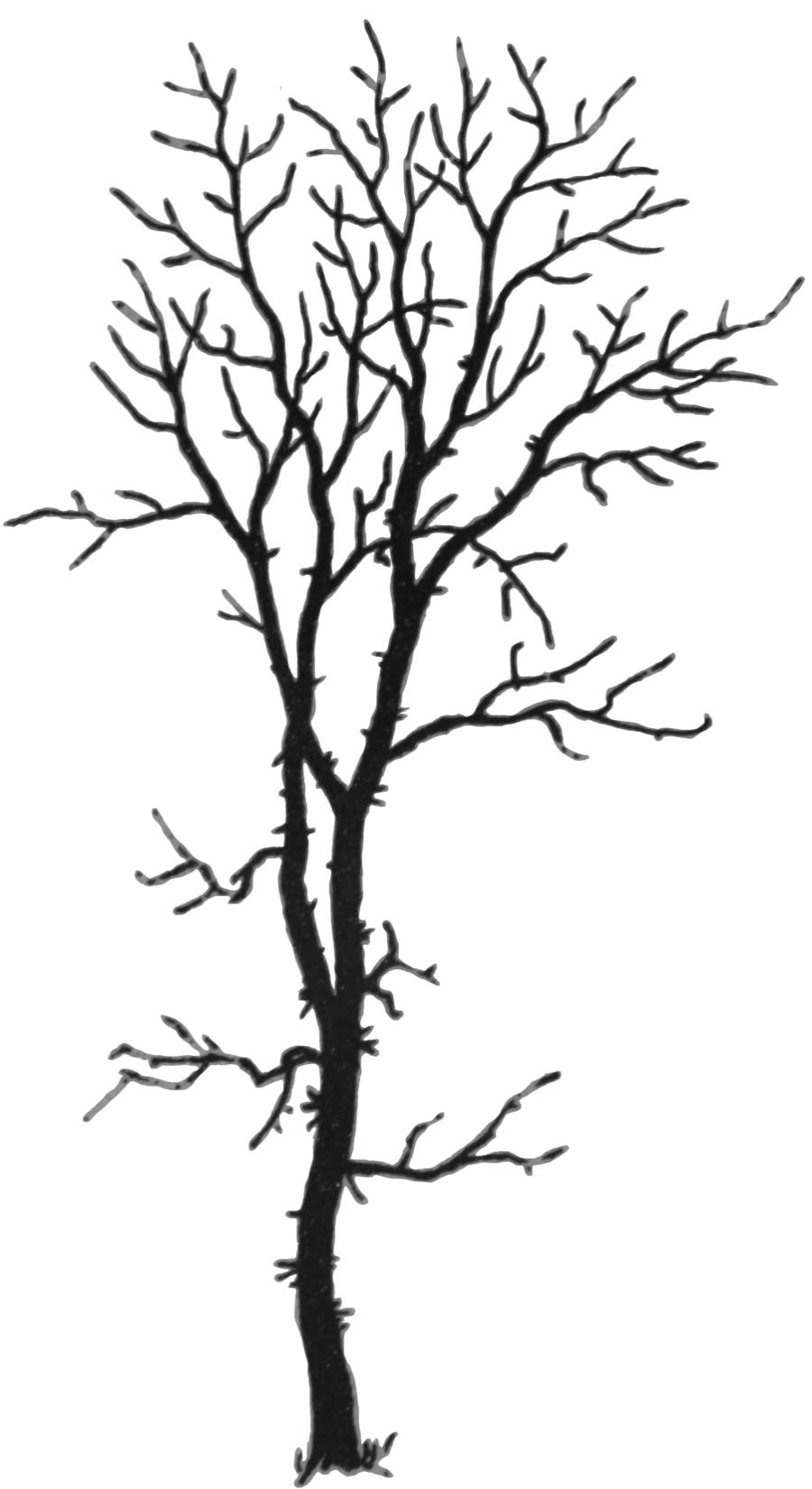 900x1650 Ars Plantarium