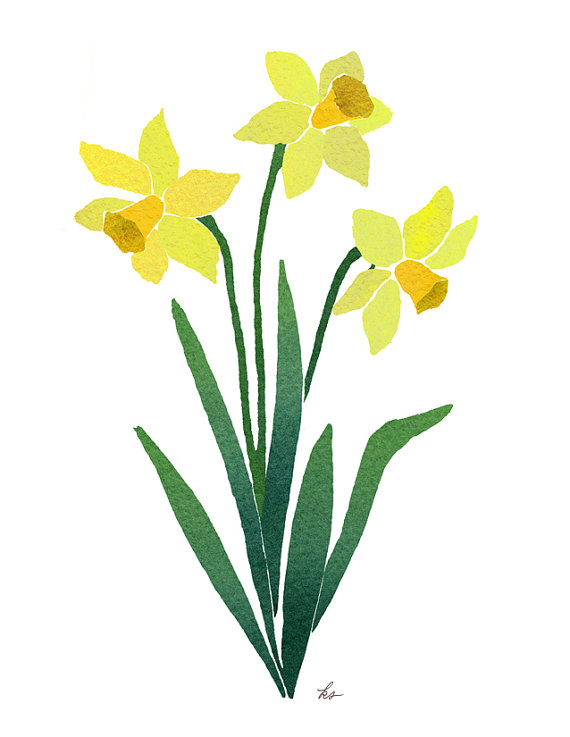 570x737 Dowloadable Art, Daffodils, Daffodil Download, Drawing