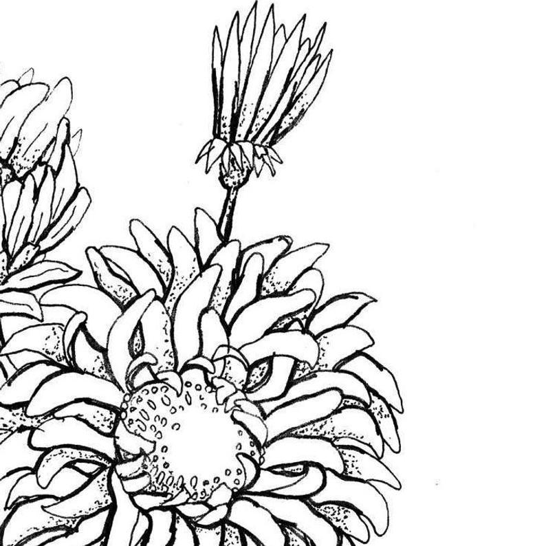794x794 Aster Flower Print Botanical Illustration Wall Art Flower Etsy