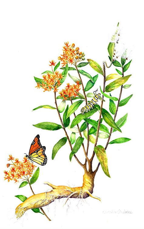 475x753 Botanical Watercolors