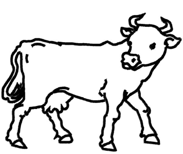 600x505 Dairy Cow Outline Coloring Pages Netart, Good Samaritan Coloring