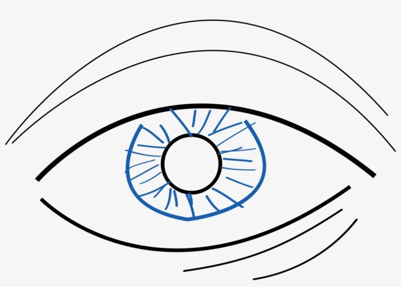 820x587 Googly Eyes Drawing Simple Eye In Invertebrates Color