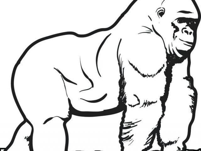640x480 Drawn Gorilla Free Clip Art Stock Illustrations