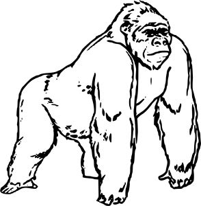 294x300 Gorilla Coloring