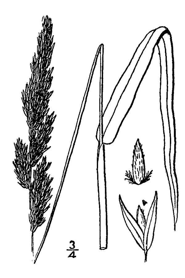 Grass Pencil Drawing