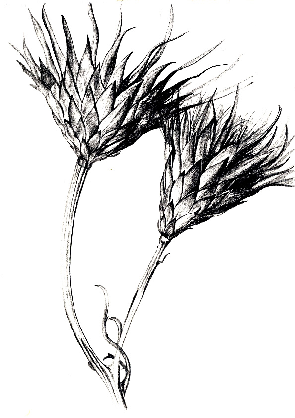 594x842 hannah siobhan stewart organic line drawings penamp inkpencil