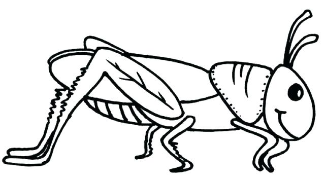 Grasshopper Line Drawing   Free download on ClipArtMag
