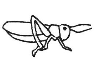 300x231 Grasshopper Drawing For Kids