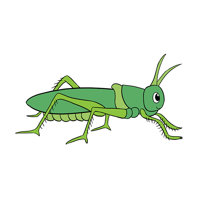 680x678 How To Draw A Grasshopper