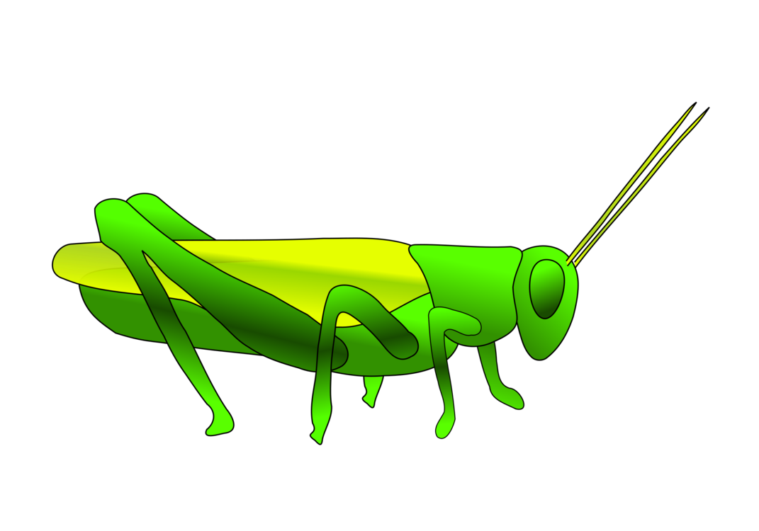1071x750 Insect The Ant And The Grasshopper Locust Drawing Cc0