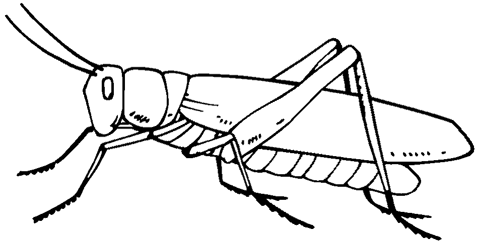 947x484 Collection Of Free Grasshopper Clipart Sketch Bean Clipart