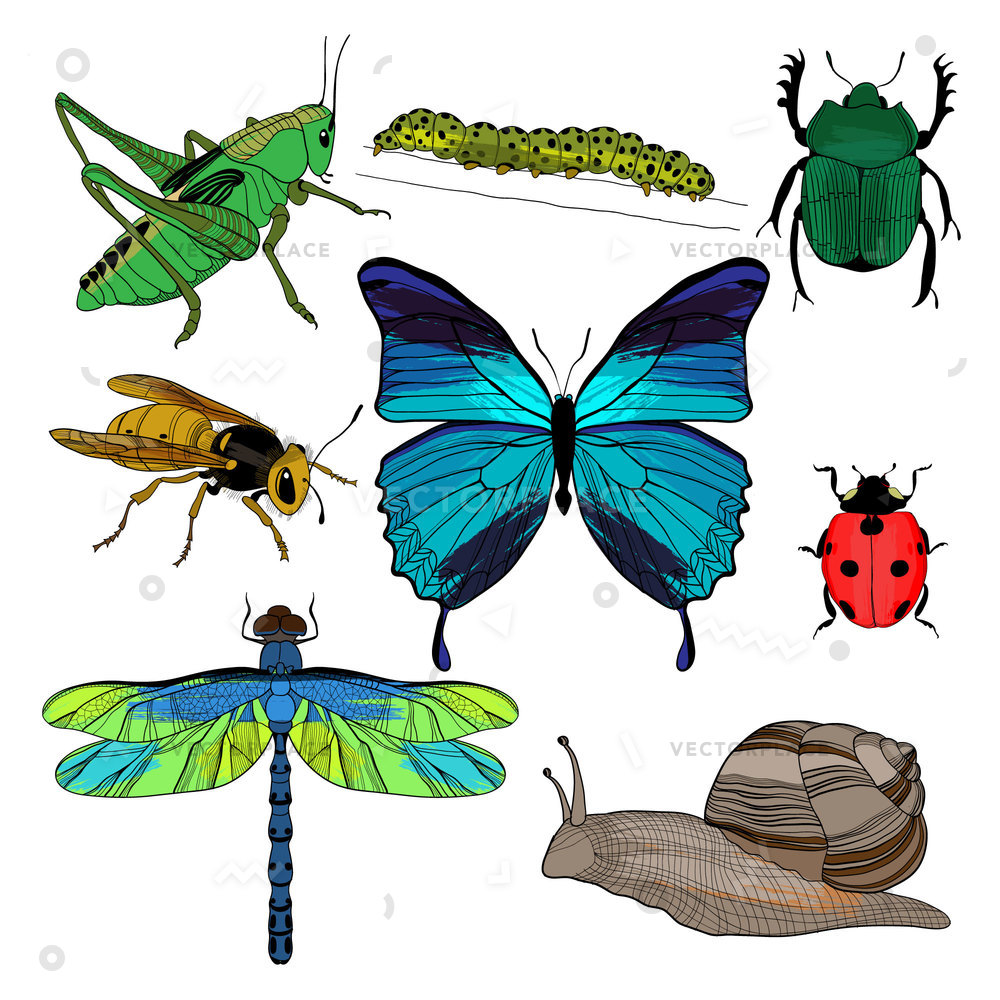 1000x1000 Colorful Drawing Insects Collection Grasshopper Wasp Vector