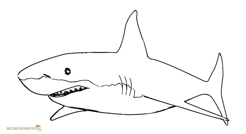 Great White Shark Outline Drawing | Free download best Great ...