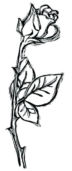240x565 rose vines drawings rose vines tattoos architecture synonym