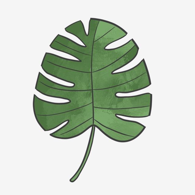 640x640 hand drawn green summer board leaf, nature, drawing, hand drawn