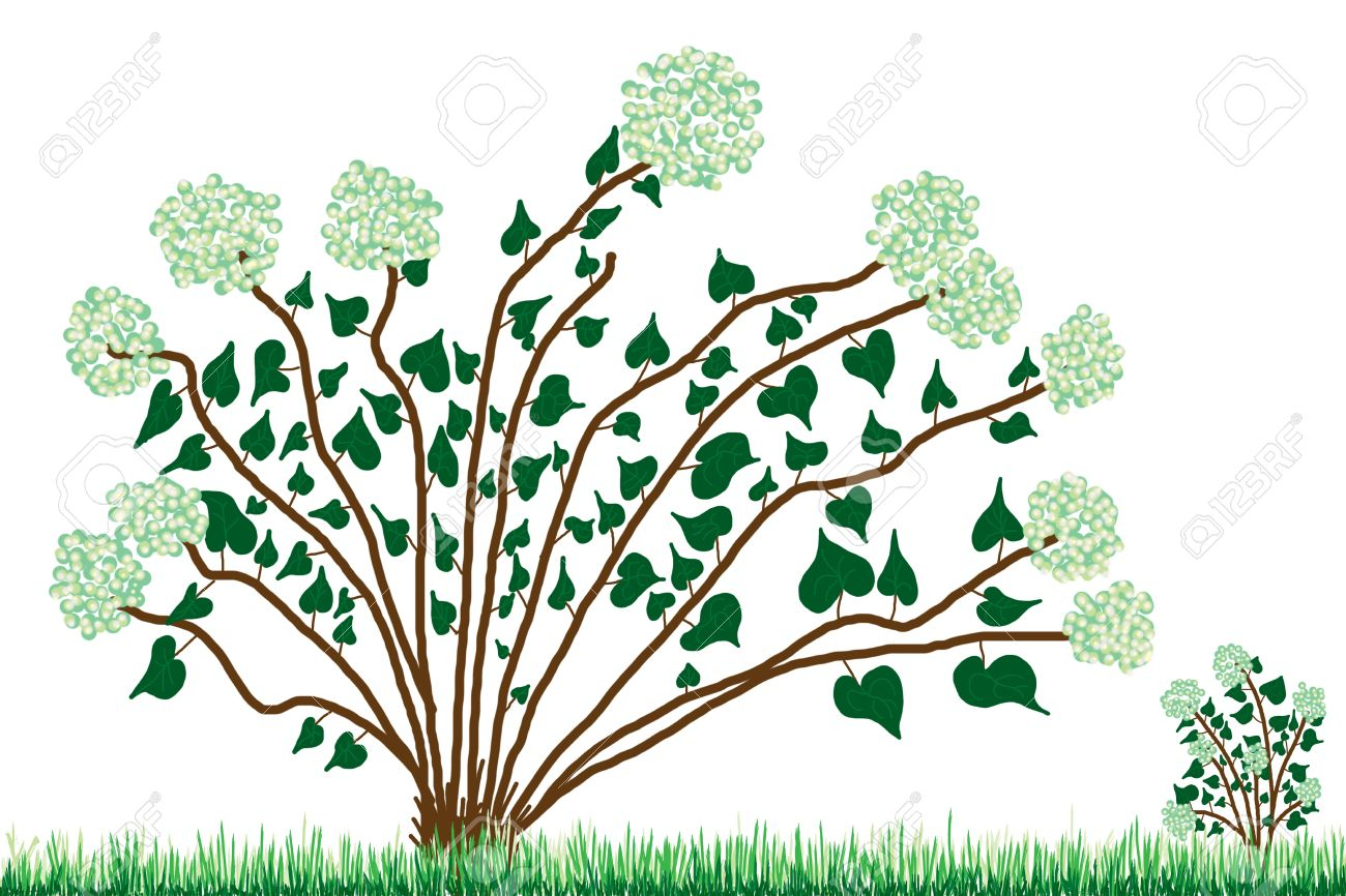 Green Grass Drawing