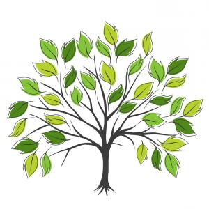 300x300 photostock vector deciduous tree with leaves and grass drawing