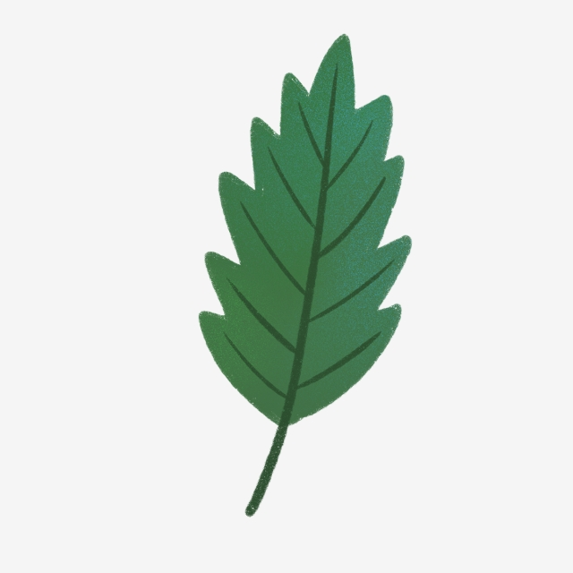 640x640 hand drawn cute dark green leaf, nature, hand drawn, drawing png