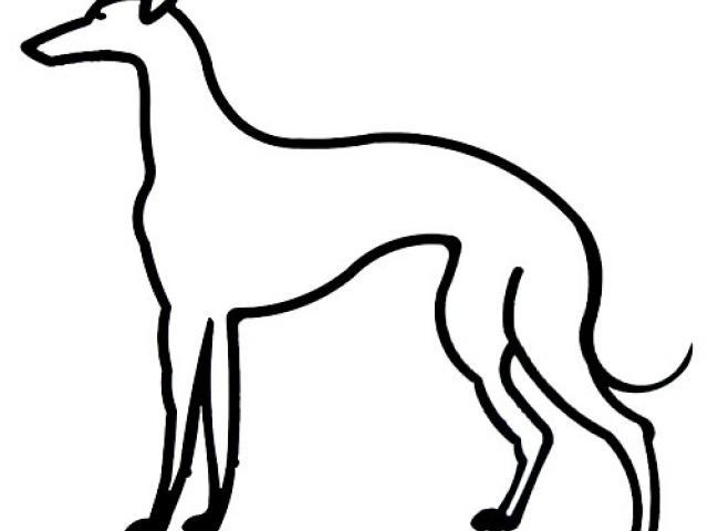 640x480 Line Art Clipart Greyhound