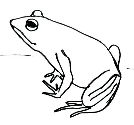 428x400 frog face drawing easy to draw frog face painting coloring pages