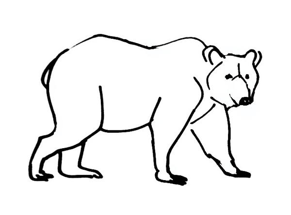 Grizzly Bear Drawing Standing | Free download on ClipArtMag