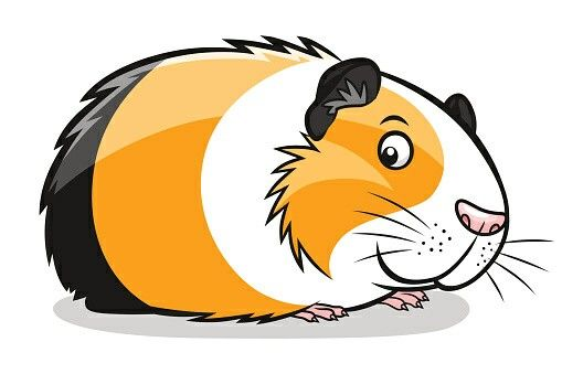 509x339 cartoon guinea pig drawings guinea pigs, pig illustration