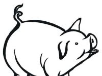 200x150 guinea pig drawing beautiful hey cute guinea pig drawing