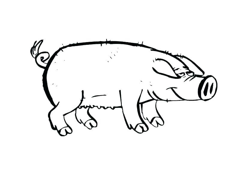 827x586 guinea pig drawings guinea guinea pig bite draws blood