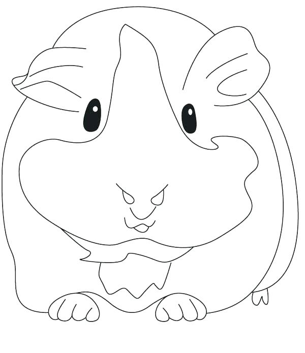 Guinea Pig Drawing Free Download On Clipartmag