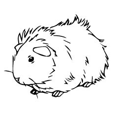 230x230 top free printable guinea pig coloring pages online guinea