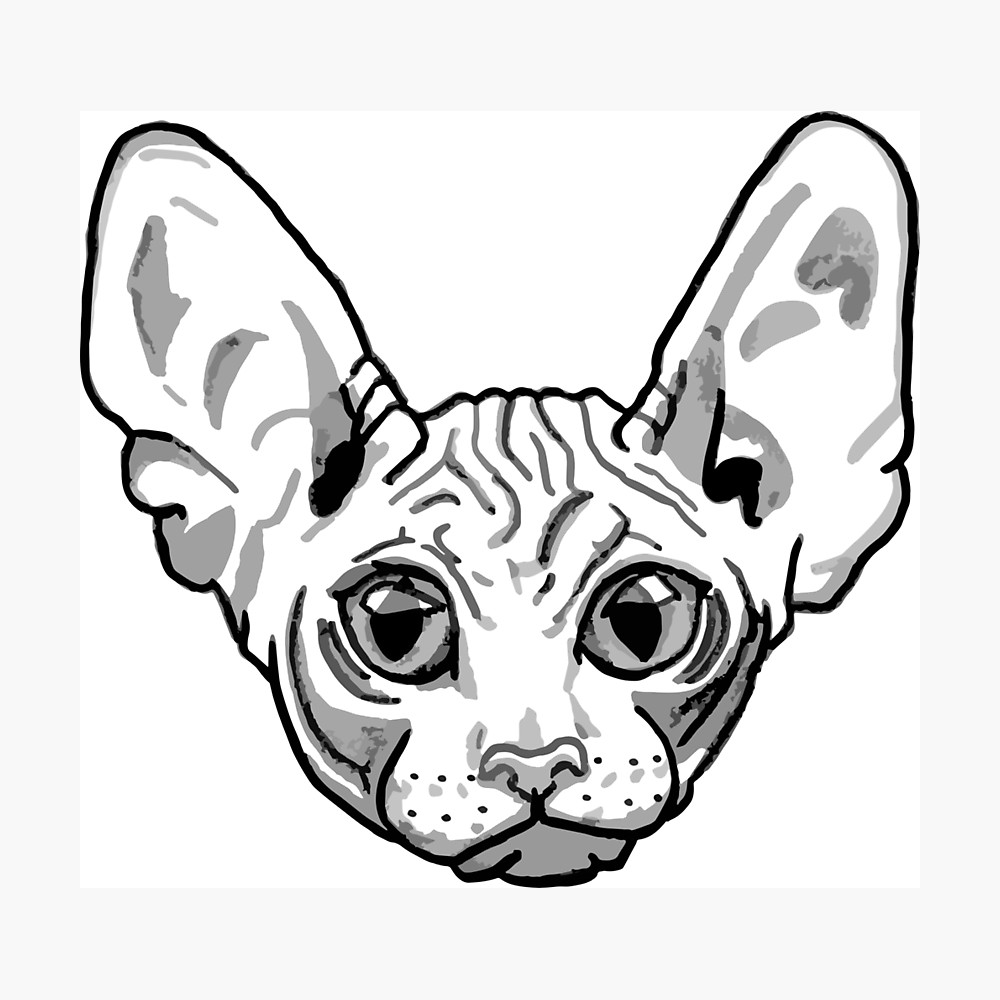1000x1000 Hairless Cat Face Photographic Print